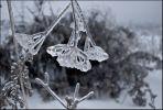 Вышел у Данилы-мастера ледяной цветок