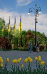 Желтые на желтых