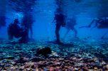 С аквалангом можно приседать, стоять, ходить и даже плавать