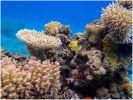 В воде. Просто кораллы