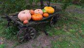 Осенние плоды в телеге
