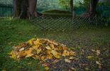 Осень в Шахматово