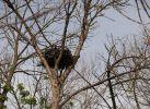 Пустое гнездо на мертвом дереве